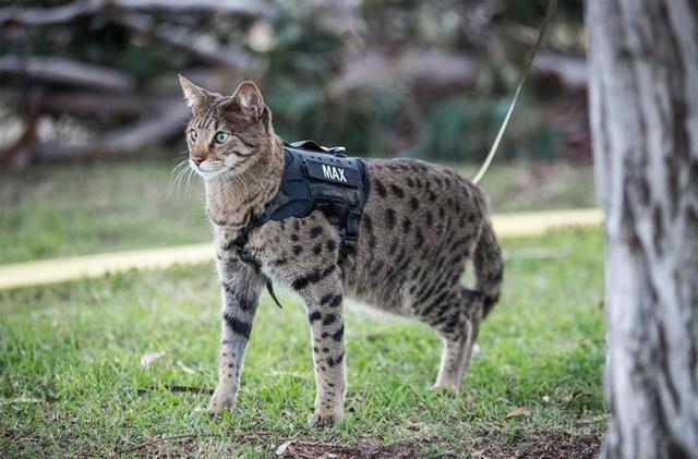 ネコ隊員も活躍中