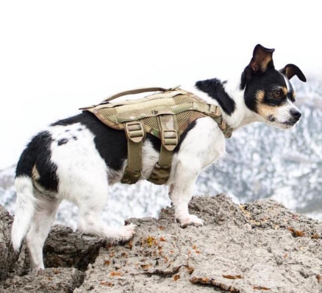 Compact K9 Tactical MOLLE Dog Vest Multicam