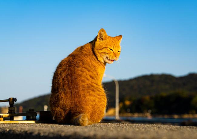 岡山で出会った猫