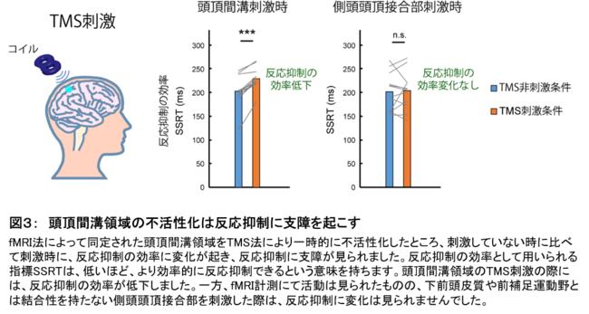 図3: 頭頂間溝領域の不活性化は反応抑制に支障を起こす