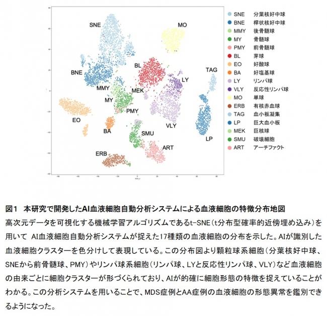 図1 本研究で開発したAI血液細胞自動分析システムによる血液細胞の特徴分布地図