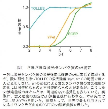 図1 さまざまな蛍光タンパク質のpH滴定