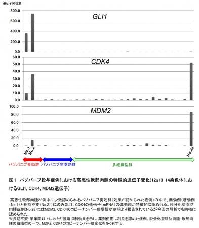 図1 パゾパニブ投与症例における高悪性軟部肉腫の特徴的遺伝子変化(12q13-14染色体におけるGLI1, CDK4, MDM2遺伝子)