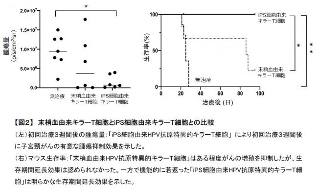 【図2】 末梢血由来キラーT細胞とiPS細胞由来キラーT細胞との比較