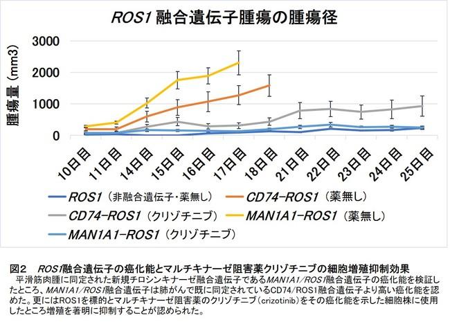図2  ROS1融合遺伝子の癌化能とマルチキナーゼ阻害薬クリゾチニブの細胞増殖抑制効果
