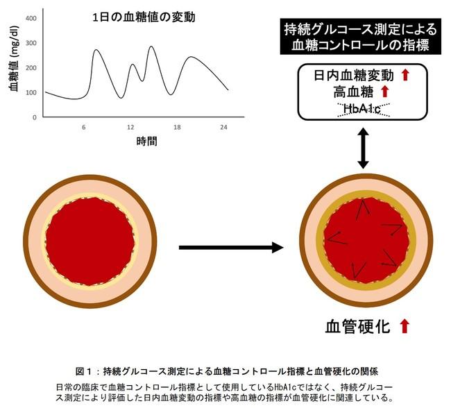図1:持続グルコース測定による血糖コントロール指標と血管硬化の関係