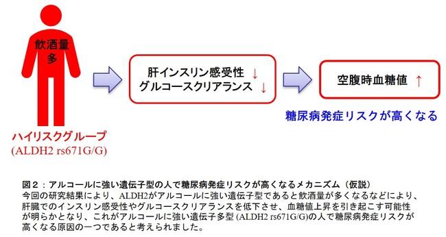 図2:アルコールに強い遺伝子型の人で糖尿病発症リスクが高くなるメカニズム(仮説)