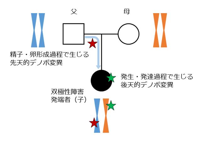 本研究の標的であるデノボ変異の概略図