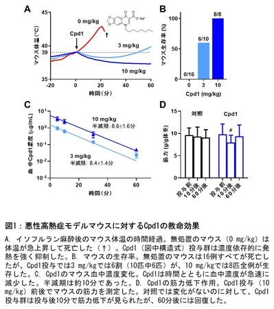 図1:悪性高熱症モデルマウスに対するCpd1の救命効果