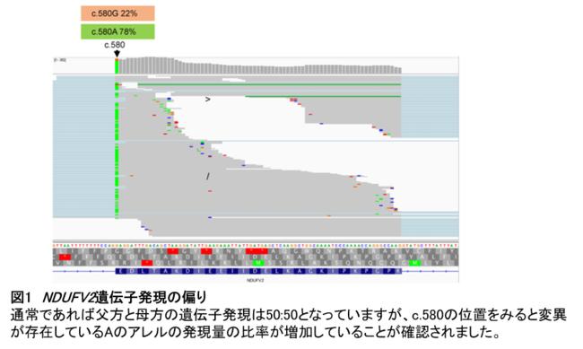 【図1】NDUFV2遺伝子発現の偏り