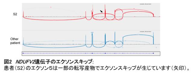 【図2】NDUFV2遺伝子のエクソンスキップ