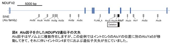 【図4】Alu因子を介したNDUFV2遺伝子の欠失