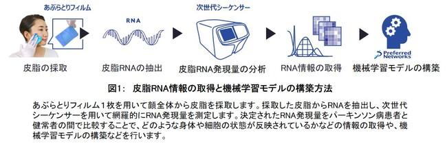 図1: 皮脂RNA情報の取得と機械学習モデルの構築方法