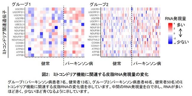 図2: ミトコンドリア機能に関連する皮脂RNA発現量の変化