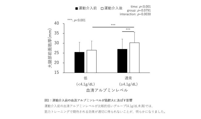 図1:運動介入前の血清アルブミンレベルが筋肥大に及ぼす影響