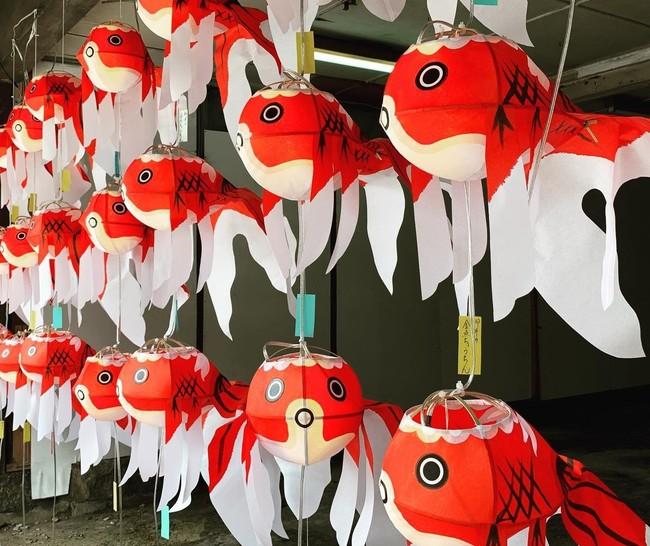 金魚提灯 イメージ