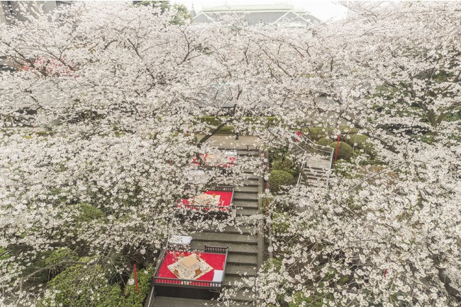 ザ・プリンス さくらタワー東京 桜桟敷席