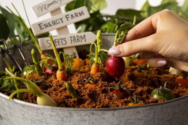 """収穫スタイルで食べるサラダは""""味の濃い野菜づくり""""にこだわりを持つ栃木のブランド野菜「エビベジ」の旬野菜。"""