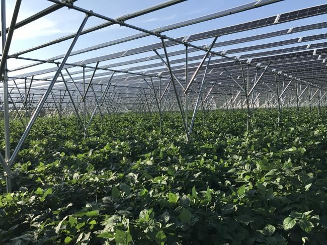 農地の上で太陽光発電(※写真は別施設のもの)