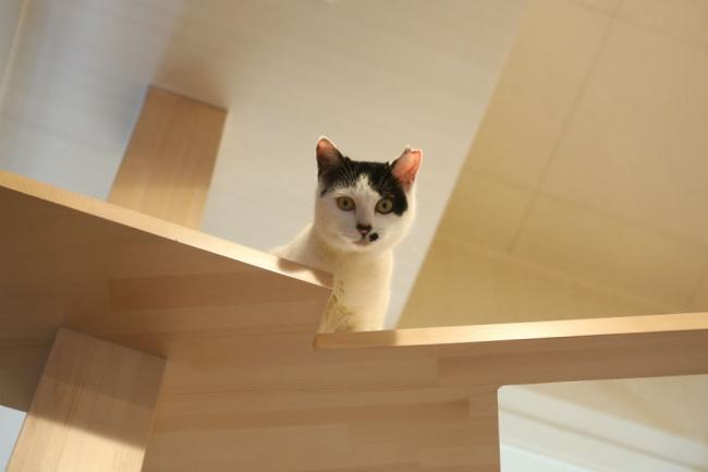 「CAT PLAZA with NECO REPUBLIC」では、譲渡対象の保護ねこがのびのび暮らしながら里親を待っている。