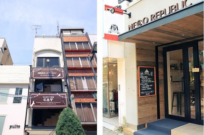 ネコリパブリック大阪店は、クラウドファンディングを活用してビルを一棟まるごと保護ねこ仕様に改装。