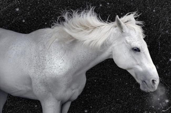 「青馬」馬は陽の獣、青は春の象徴色。平安時代から今も正月の7日に青馬を眺め邪気を払う。(上賀茂神社 神馬)