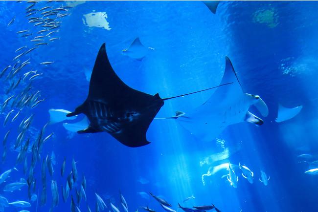 「国営沖縄記念公園(海洋博公園):沖縄美ら海水族館」