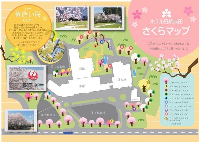 ホテル日航成田 桜マップ
