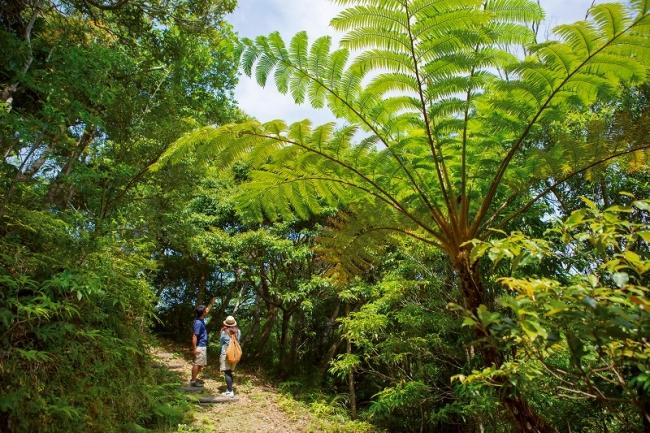 【オクマ プライベートビーチ & リゾート】やんばるの森探検ツアー
