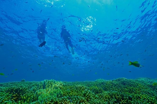 【オクマ プライベートビーチ & リゾート】綺麗な海中の世界を満喫できるシュノーケリングツアー