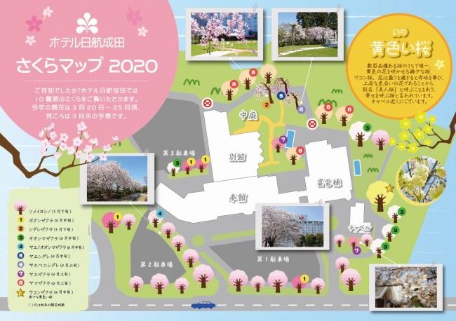 桜の位置や種類を記載した「さくらマップ」もご用意