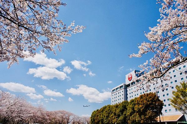 「桜めでる2019」グランプリ阿部信子様の作品 『SAKURA@hotel nikko narita』