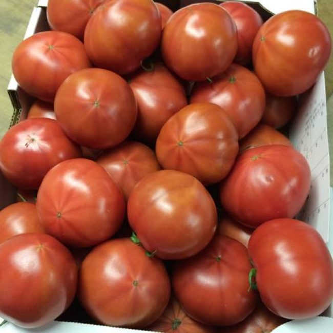 陽洋トマト