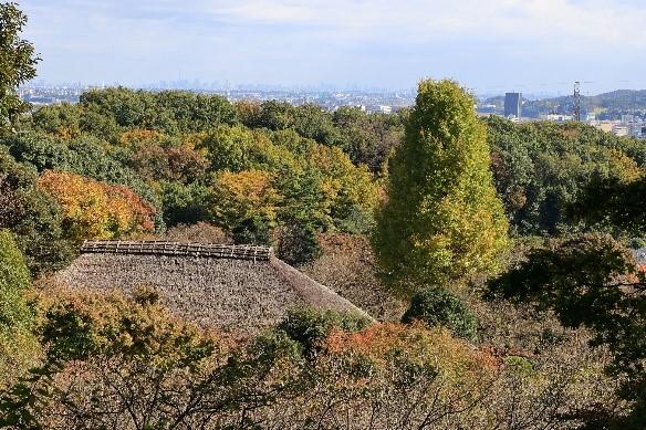 京王百草園の様子11月9日撮影