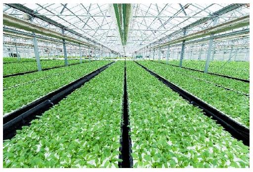 女優・川栄李奈さんご出演の企業CM「野菜」篇でお馴染みオリックスグループの農事業をご紹介する「ORIX Vegetable Farm」を六本木ヒルズに期間限定オープン!