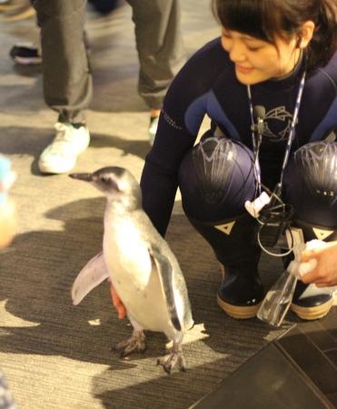 「ペンギン赤ちゃんのぺたペン」イメージ