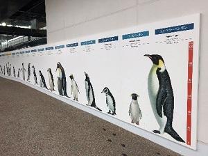 全種(18種)の大きさが比較できるパネル展示