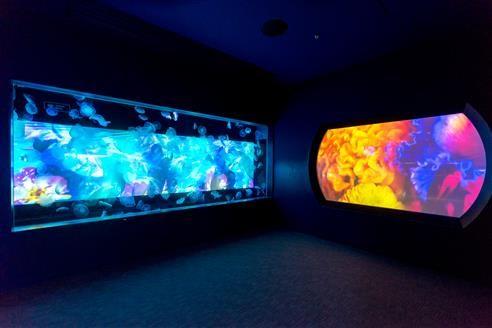 刻々と色彩を変える大型のクラゲ水槽