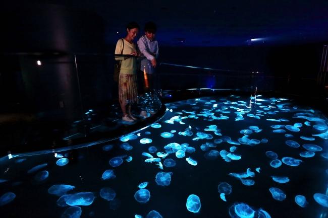 クラゲの新体感水槽「ビッグシャーレ」