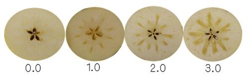 蜜入り区分(蜜入り指数)