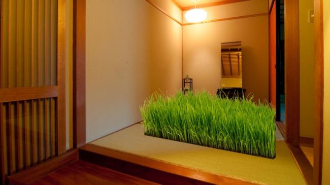 田んぼシートに稲がなった状態。