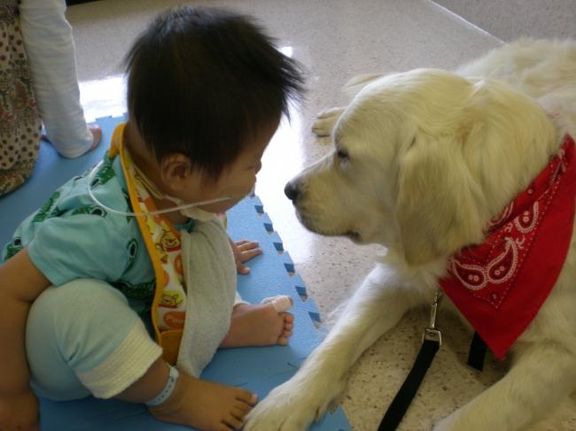 日本で初めてのファシリティドッグ・ベイリーと男の子