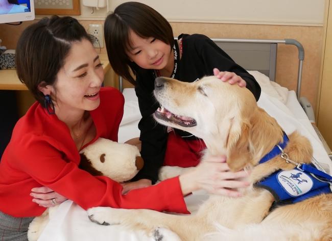 写真2:神奈川県立こども医療センターで活動するファシリティドッグ、アニー