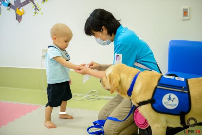 写真3:東京都立小児総合医療センターで活動する、ファシリティドッグのアイビーと、ハンドラー 大橋真友子。触れ合いの前に手指衛生を行う。