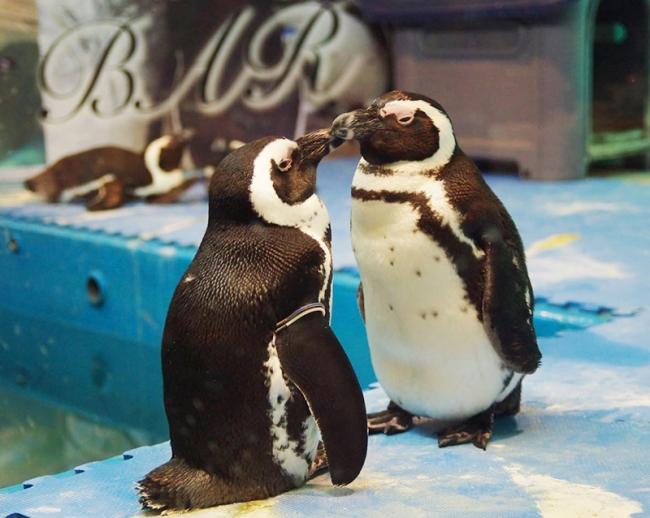 ペンギン夫婦