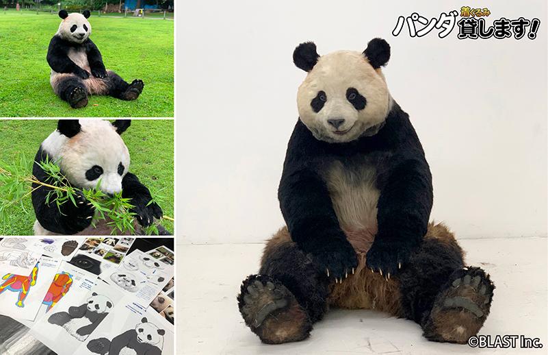 『 パンダ貸します 』 ほぼ本物!「 パンダ着ぐるみ 」レンタル開始!