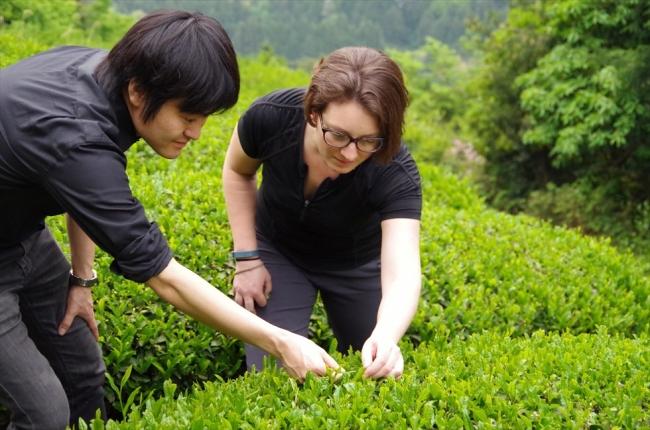 スタッフより、茶摘みの方法などご案内いたします。