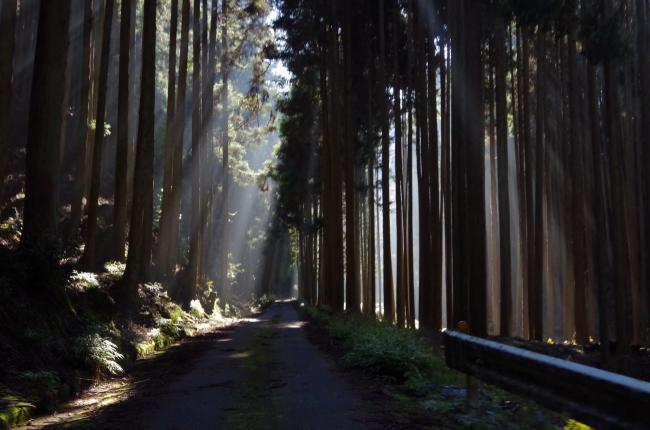 車でも進むことのできる山道ですが、歩きにくい箇所もありますので動きやすくハイキングに適した格好のご準備をお願いいたします。