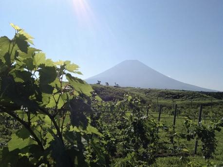 The Caravan in 富士山麓の大草原 チェックイン後にはブドウ畑の散策も。