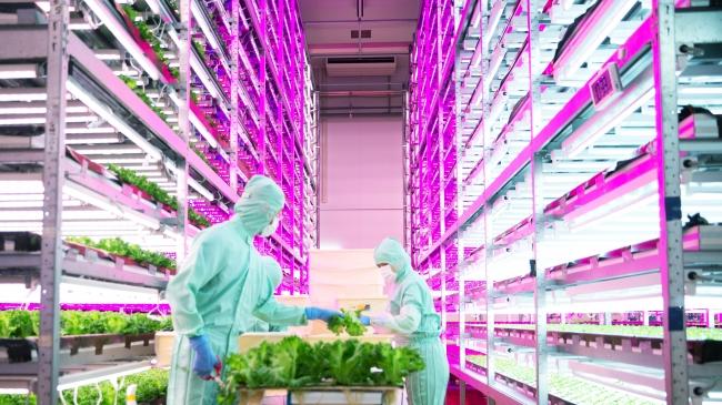 MIRAI株式会社の植物工場(多賀城工場)の様子